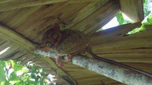 【フィリピン】ボホール島の不思議な動物と絶景!現代の楽園を楽しむポイントとは?