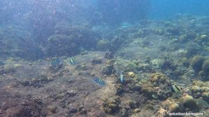 【TG-6】リぺ島にてシュノーケーリングツアーに参加したので体験レビューと水中撮影写真アップします